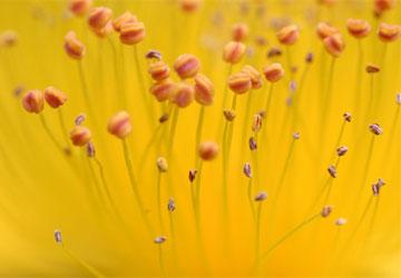 Kinh nghiệm chụp ảnh - Bí quyết chụp ảnh hoa