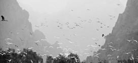 Bí quyết chụp ảnh trắng đen đẹp