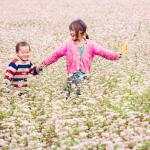 Tháng 10 phải đến Hà Giang ngắm hoa Tam Giác Mạch